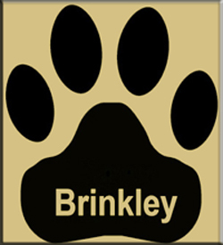 Brinkley 2017 in Action